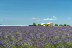 French Lavender fields Royalty Free Stock Photos