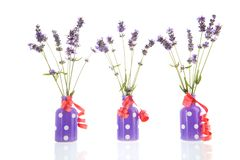French lavender in vases Royalty Free Stock Photography