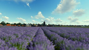 French lavender village with old windmill against blue sky stock video