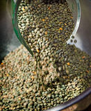 French lentils. Pouring into a stainless steel bowl Royalty Free Stock Images
