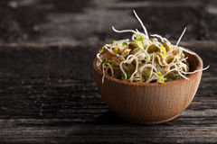 French Lentils Sprouts in a Wooden bowl. Close-up of French Lentils Sprouts in a Wooden bowl Stock Photography