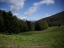 French lower alpine valley with trees and grass Royalty Free Stock Image