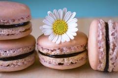 French macarons stock photos