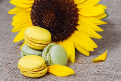 French macarons with yellow sunflowers Stock Images