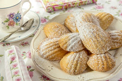 French madeleines. At tea time Stock Images
