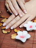 French Manicure. Female hands with french manicure royalty free stock images