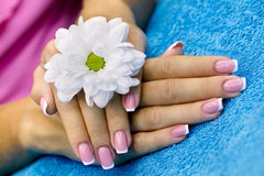 French manicure. Women's hands with french manicure and flower stock photography
