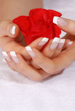 French Manicure And Scarlet Rose Stock Photography