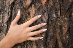 French manicure on a background of a bark-1. French manicure Royalty Free Stock Images