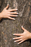 French manicure on a background of a bark-2. French manicure Royalty Free Stock Images