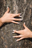 French manicure on a background of a bark-3. French manicure Royalty Free Stock Photos