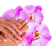 French Manicure. Beautiful Female Hands with pink orchid flowers Royalty Free Stock Photography