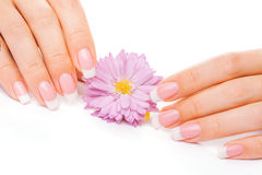 French manicure with chrysanthemum Stock Photos