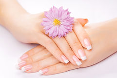 French manicure with chrysanthemum Stock Photography
