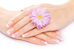 French manicure with chrysanthemum Stock Photo