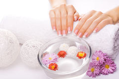 French manicure with colorful chrysanthemum Stock Photo