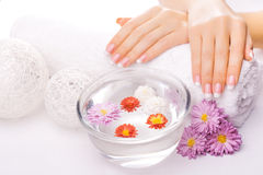 French manicure with colorful chrysanthemum Royalty Free Stock Photos