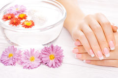 French manicure with colorful chrysanthemum Royalty Free Stock Image