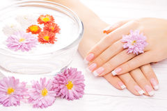 French manicure with colorful chrysanthemum Stock Photography