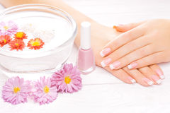 French manicure with colorful chrysanthemum Stock Photos