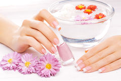 French manicure with colorful chrysanthemum Royalty Free Stock Photography