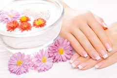 French manicure with colorful chrysanthemum Stock Image