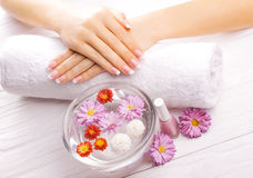 French manicure with colorful chrysanthemum Stock Images