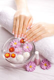 French manicure with colorful chrysanthemum Royalty Free Stock Photo