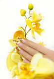 French manicure. Long French manicure with yellow orchids on a white background stock photo