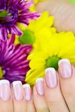 French manicure made Royalty Free Stock Photography