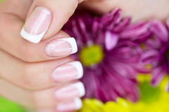 French manicure made. French manicure on the hands of woman near the flowers royalty free stock images
