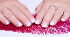 French manicure and pink feather Stock Images