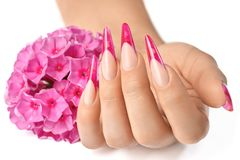 French manicure with pink flowers. French manicure on the hands of a woman, with pink flowers on a white background royalty free stock photos