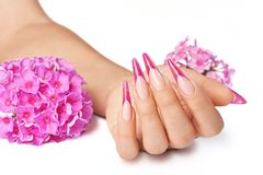 French manicure with pink flowers. French manicure on the hands of a woman, with pink flowers on a white background royalty free stock images