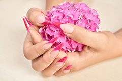 French manicure with pink flowers. French manicure on the hands of a woman, with pink flowers on a wooden background royalty free stock image