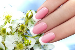 French manicure. French manicure with pink and white lacquer against the background of flowers royalty free stock photography