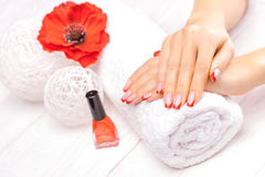 French manicure with red poppy flower Stock Image