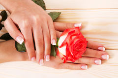 French manicure and red rose Stock Photos