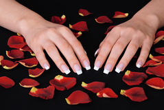 French manicure and red rose petals. Beautiful woman hands with french manicure lying on black background with rose petals royalty free stock image