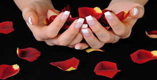 French manicure and rose petals. Beautiful woman hands with french manicure holding red rose petals stock photography