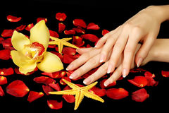 French Manicure, Rose Petals And Orchid Royalty Free Stock Photography