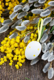 French mimosa and catkins with easter eggs Stock Photography
