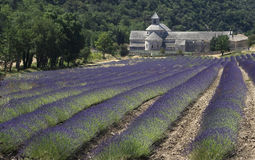 French Monastery and Fields of Lavender. Abbaye Notre Dame de Senanque, a monastery in the Provance region of Southern France Royalty Free Stock Photo