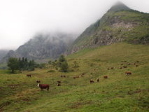 French mountains with green grass and cows. From the Aravis pass - France - The Alps Stock Photography
