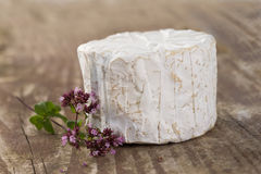 French musty blue cheese from Auvergne Stock Photo