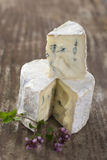French musty blue cheese from Auvergne Stock Image
