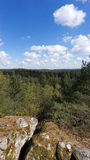 French Natural forest in Ile de France Royalty Free Stock Photos