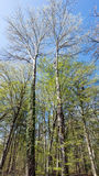 French Natural forest in spring season Stock Photo
