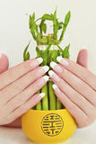 French oval manicure. French oval manicure with bamboo on a gray background royalty free stock photography