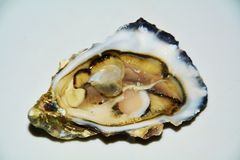 French oyster on white background royalty free stock images